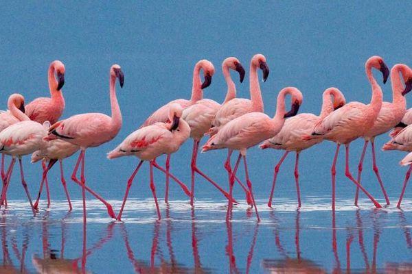Birdwatching in Cervia